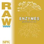 Raw Enzymes